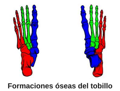 Formaciones óseas del tobillo