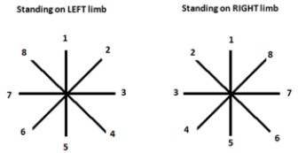 Meniscopatía - Star Escusion Balance Test